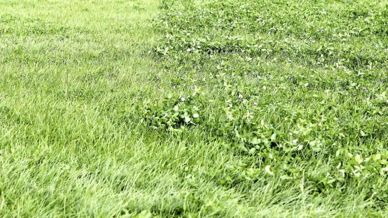 Græsblandingen skal vælges ud fra dyrkningsforholdene og ikke fordøjelighed eller kløvertype, lyder konklusionen fra to markforsøg. Arkivfoto: Christian Carus