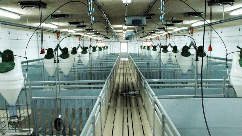Flere danske svineproducenter ventes at ville bygge til eller bygge nyt den kommende tid. Arkivfoto: John Ankersen