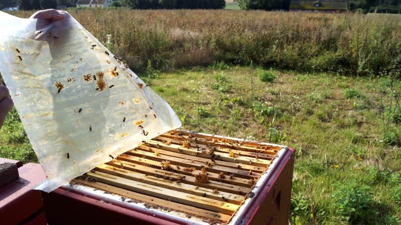 Det skal være nemmere at advare mod smitsomme sygdomme hos bier. Derfor bliver det nu obligatorisk for biavlerne at tilmelde sig centralt bigårdsregister.