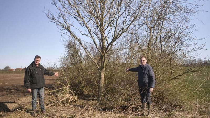 Mælkeproducent Niels Erik Maegaard (tv) viser her folketingsmedlem Erling Bonnesen et nyt hegn, som er etableret på bar mark i 2001. Det brede hegn har med naturens egen kraft skabt en digeformation, som er 20-30 cm over markniveauet.