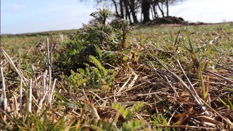 Regeringen og Miljø- og Fødevareudvalget skal bruge løsninger, som både varetager klimahensyn og fokuserer på biodiversitet i bred forstand, i landbrugets grønne omstilling, skriver de tre organisationsformænd. Arkivfoto