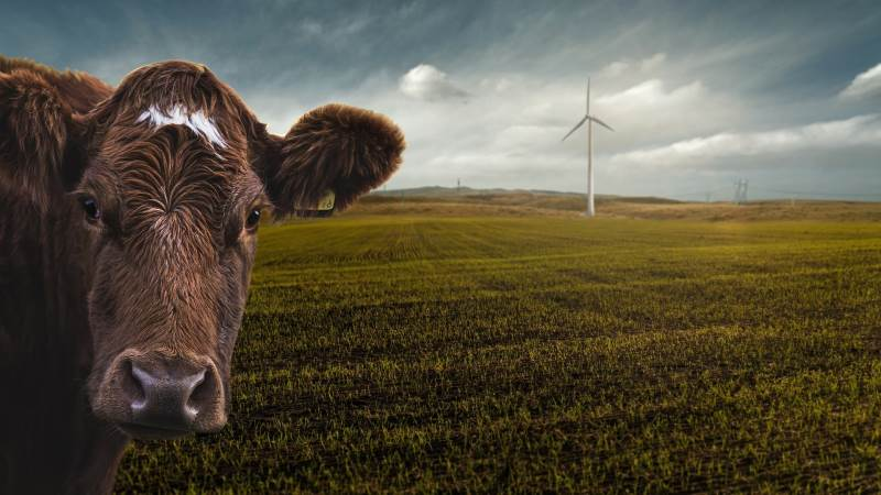 Andelshaverne hos Arla vil fremover kunne gavne mejeriets CO2-udledning ved at sælge den grønne strøm, mange af dem producerer ved siden af mælken. Foto: Pixabay