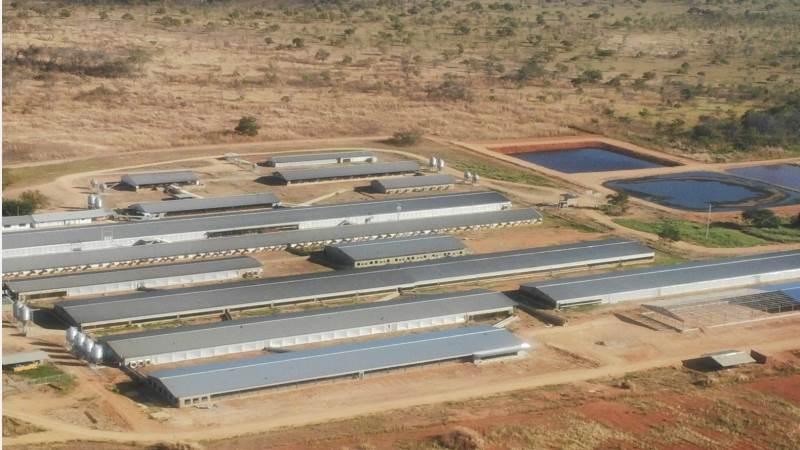 Den første af de to svinefarme, som Plumrose ejer og driver i Venezuela. For at øge biosecurity er 5.000 hektar omkring staldene købt med. Her græsser i perioder op til 2.600 stykker kødkvæg.