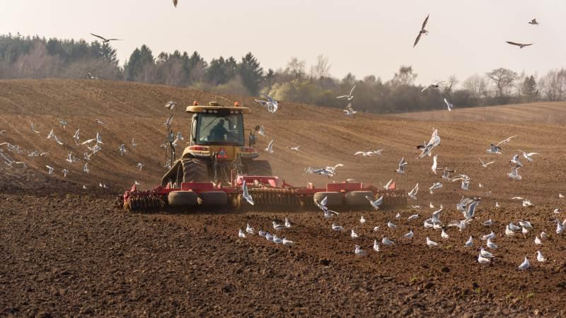 Regeringens netop fremlagte klimaplan for landbruget er på væsentlige områder direkte skadelig for klimaet, mener læserbrevskribenten. Foto: Colourbox