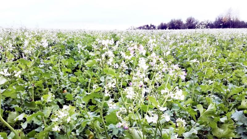 Vi har nået grænsen for den målrettede regulering, understreger planteformand i L&F, Torben Hansen.