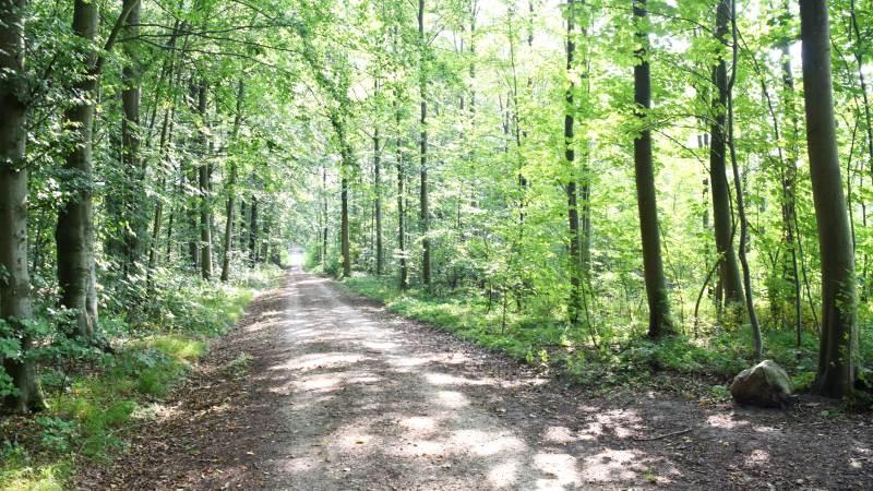 Naturnationalparker er vejen frem for at sikre den danske natur, mener Trekløveret bag de kommende naturnationalparker. Arkivfoto