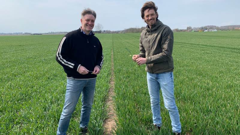Med sortsbladninger i hvede tager vi en form for helgardering, siger Jens Martin Bramsen (th.), der her ses sammen med Torben Føns, faglig konsulent i Hedegaard.