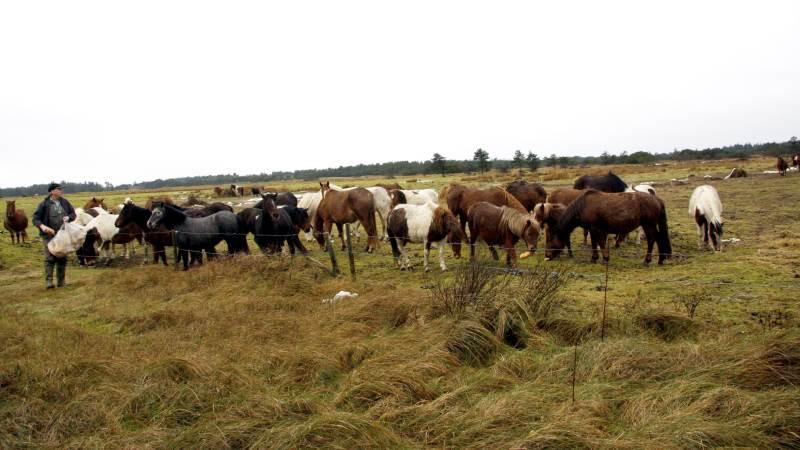 Jeg fik afslag på en dispensationsansøgning, men nu ser jeg, at regeringen i deres fremsatte lovforslag gældende for natur-nationalparker søger om dispensation for læskur til heste magen til mine, skriver naturplejer Ulf Nielsen.