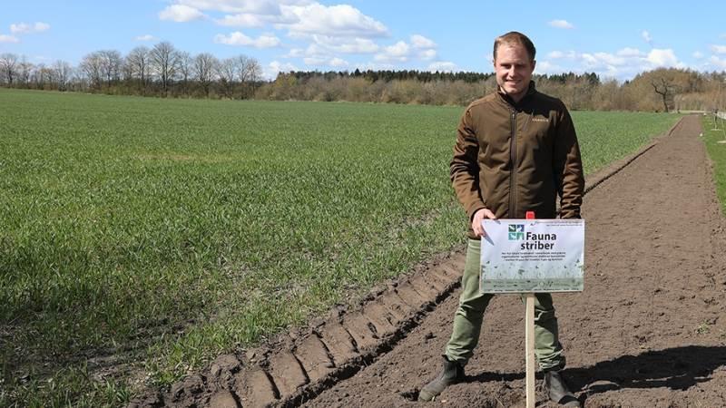 - Man behøver ikke lave store investeringer. Og så er det vigtigt ikke at være bange for ukrudt, påpeger naturrådgiver hos Sagro Nicolai Smed Kjær om de tiltag for biodiversitet, som landmænd kan lave.