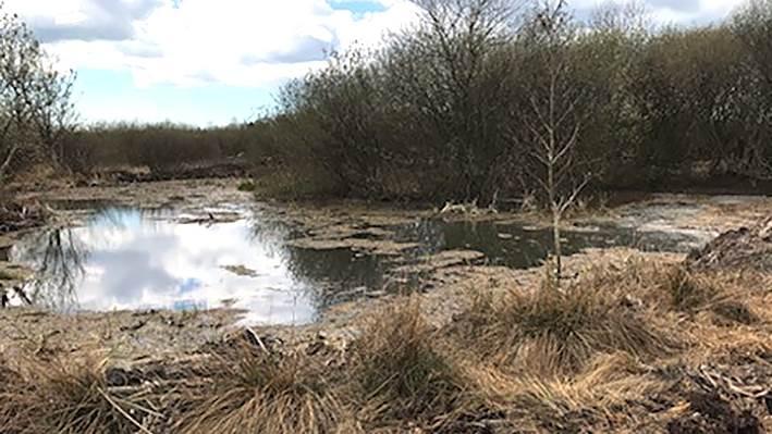 Billede af en Preben Lauridsens søer. Privatfoto