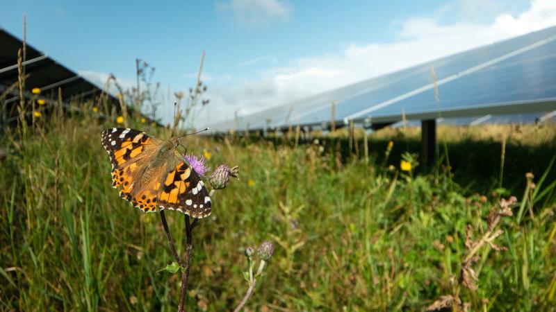 En rapport viser, at solcelleparker understøtter den langsigtede udvikling af biodiversitet.