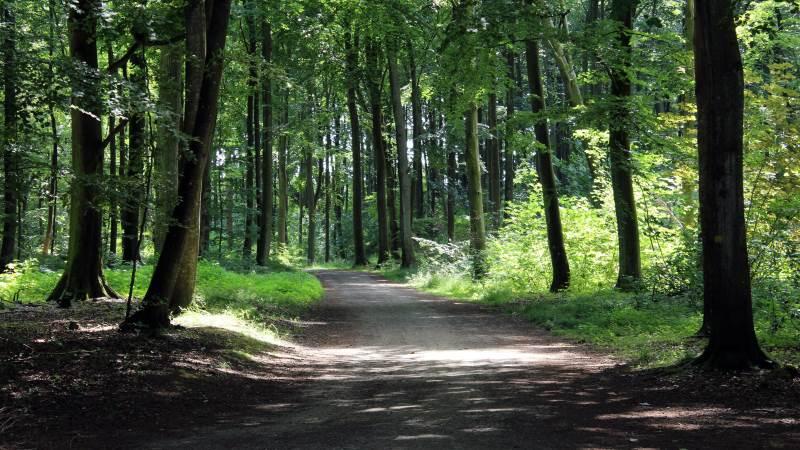 Landbrugsstyrelsen har givet grønt lys til etablering af 420 nye skove. Foto: Colourbox
