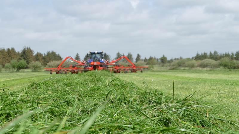 I det omfang føret tillader det, bliver der travlt i slætgræsmarkerne i denne uge. De foreløbige græsanalyser fra de kolde maj-uger viser et generelt højt proteinindhold og markant lavere sukkerindhold end eksempelvis sidste år, skriver Seges. Arkivfoto: Bøje Østerlund.