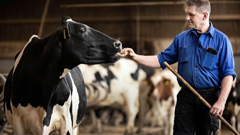 Bent Jørgensen har 300 malkekøer på bedriften ved Thyregod i Midtjylland.