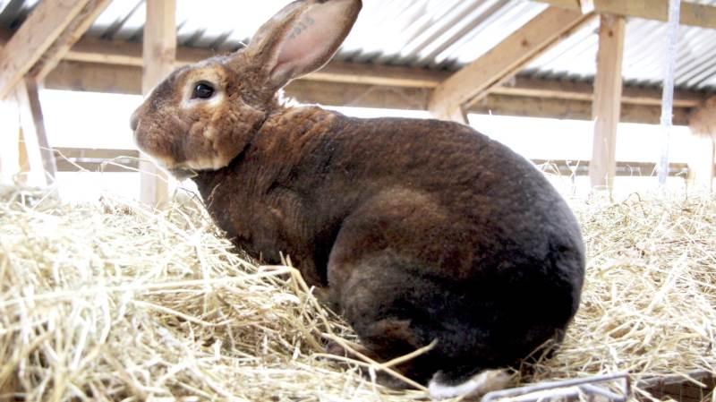 Den internationale dyreværnsorganisation World Animal Protection måtte fjerne pressemeddelelsen efter kritik fra Kasper Frank Christensen, der er kommunikationschef i Sagro. Foto: Arkivfoto