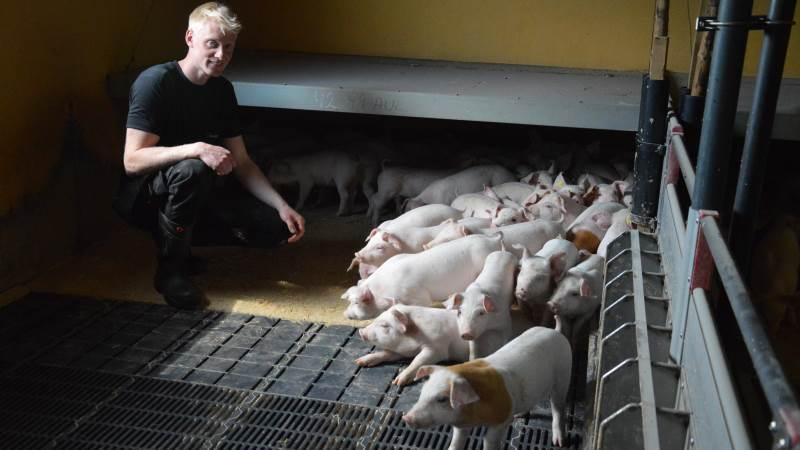 24-årige Malthe Bach Laursen på Lundgård i Overlade ved Løgstør i Nordjylland har siden januar 2020 haft ejerrollen uden endnu at være ejer for bedriften, der blandt andet omfatter et sohold på 1200 årssøer med produktion af smågrise op til 30 kg. Foto: Camilla Bønløkke.