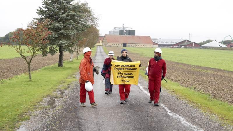 Greenpeace har i årevis kørt kampagner mod landets svineproducenter. Nu går foreningen efter Danish Crown. Arkivfoto: Henrik Sieben
