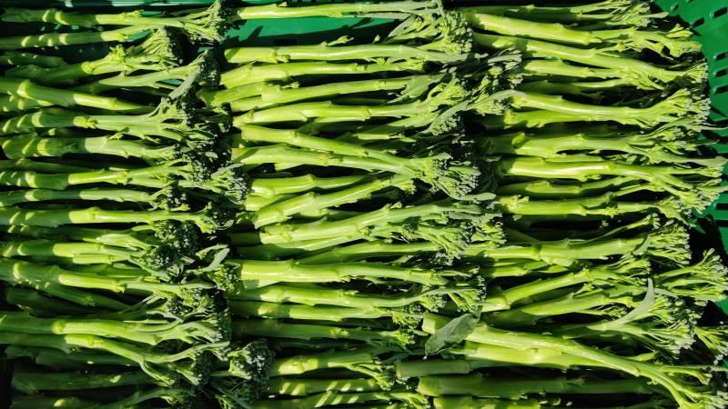 Sådan ser Bimi-broccolien ud. Denne ydmyge grøntsag har over det seneste år gået frem i salg op mod 64 procent stigning siden sidste år. Foto: Axel Månsson