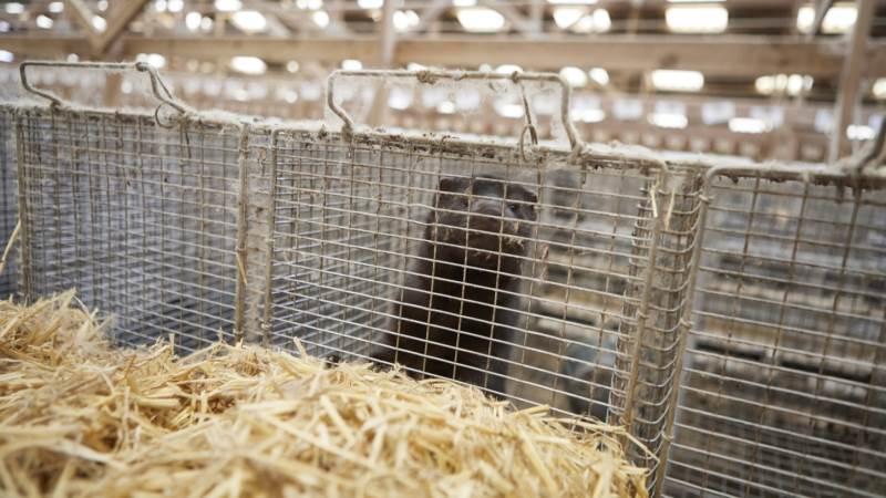 Virksomheden har i over 50 år fremstillet minkfoder til anvendelse på andelshavernes minkgårde. Foto: Erik Hansen