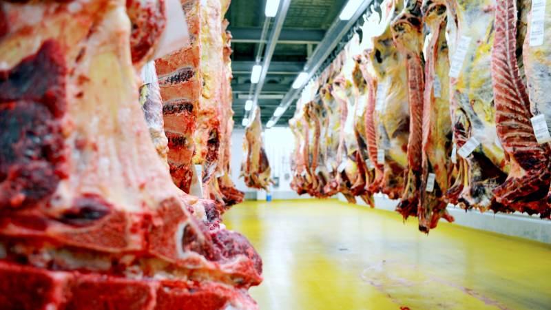 Der er normal drift for årstiden på DC Beef-slagterierne, som her i Holsted. Arkivfoto