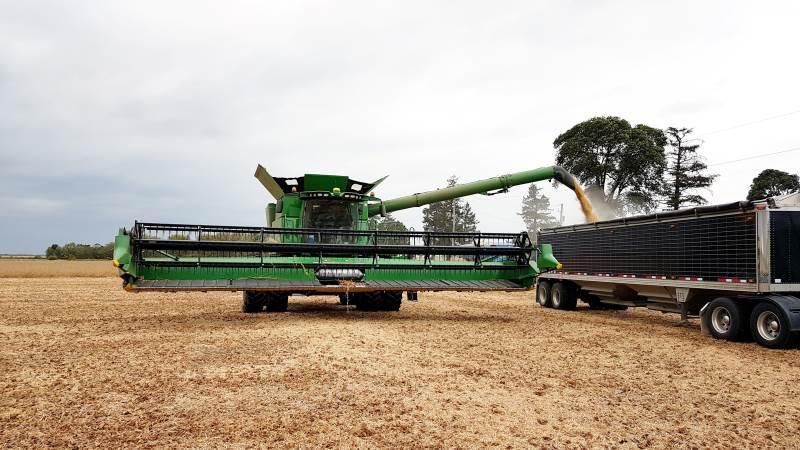 Afgrødeestimaterne i USA fortsætter ned. Arkivbillede fra sojabønnehøst i Wisconsin.
