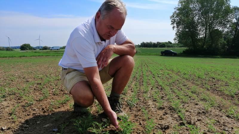 Det var en australsk bekendt, der foreslog Olav Ditlevsen, om man ikke kunne dyrke kikærter i Danmark, nu hvor gennemsnitstemperaturen stiger. Foto: Michael Strandfelt