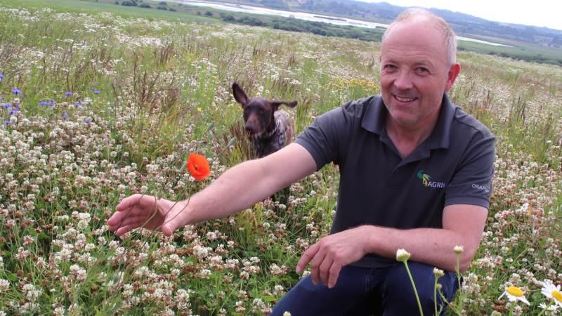 Griseproducent Lars Olsen dyrker både biodiversitet og landbrug på sin ejendom i Halkær ved Nibe. Her er han og hunden Teis i kløvermarken, der fungerer som gødning til næste afgrøde, og som skaber biodiversitet med sine mange blomster.