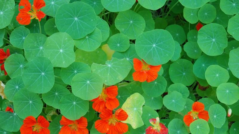 Det kan friste at tage eksotiske planter med hjem fra ferien, men det kan medføre risisci for den danske natur. Foto: Colourbox