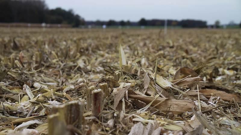 Det er en god ide at lade planterester rådne på marken. For det er godt for klimaet.