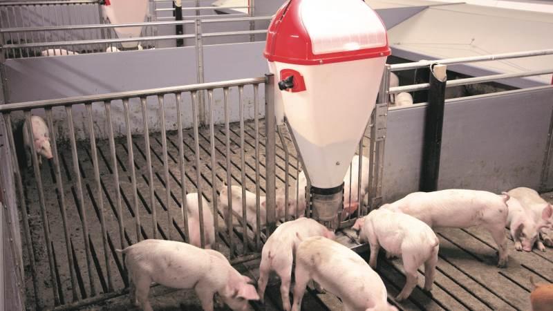 ACO Funki A/S, der er specialister inden for blandt andet svinestalde og inventar, kan se tilbage på et godt år. Arkivfoto