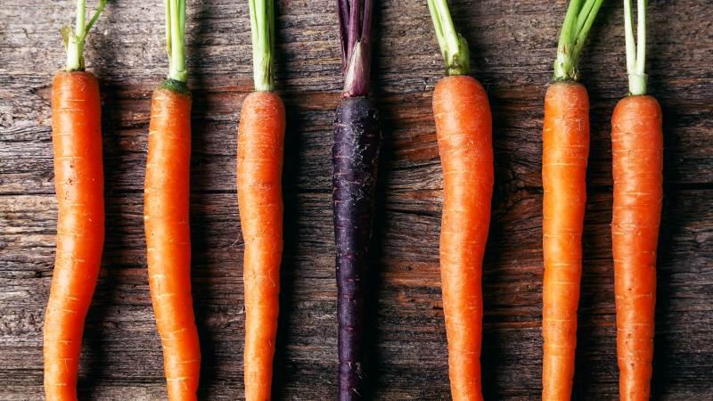 Det naturlige farvestof, anthocyanin, findes ikke i de orange gulerødder, men genet er dog skjult i deres DNA. Derfor forsøger forskerne på at aktivere genet og få dem tilbage til deres lilla artsfæller. Foto: Colourbox