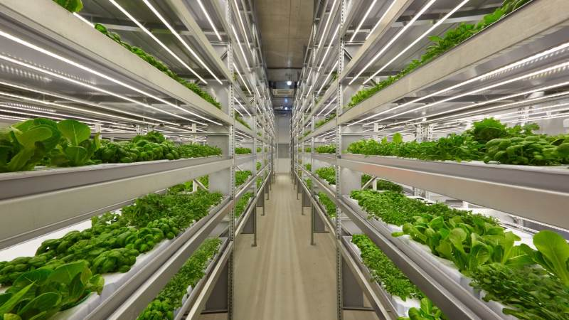 Vertikale landbrug som dette springer op overalt i verden, da fordelene ved denne type dyrkning bliver mere og mere udbredt. Foto: iFarm via Wikimedia Commons