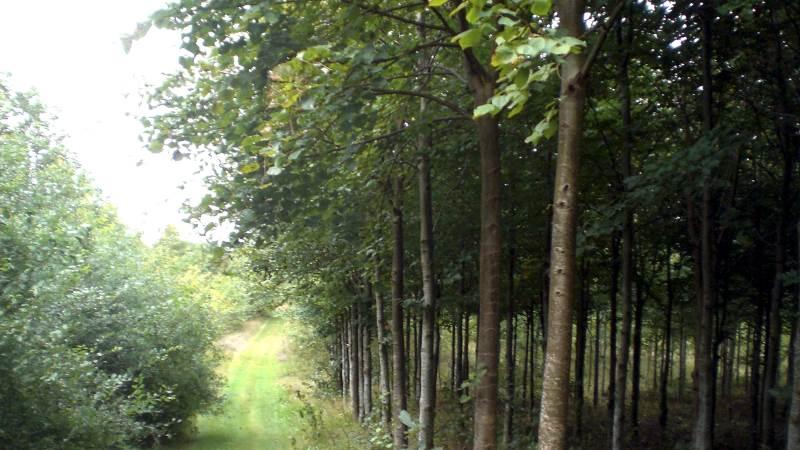 Årets ansøgningsrunde til privat skovrejsning er åben til den 30. september. Arkivfoto