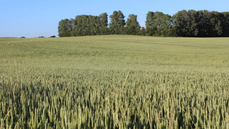 Hos agrotech-virksomheden Syngenta er man for alvor gået ind i bæredygtighedskampen. En kamp, der ikke kan kæmpes ved at sætte sin lid til blot én teknologi - alle midler bør tages i brug. Foto: Syngenta