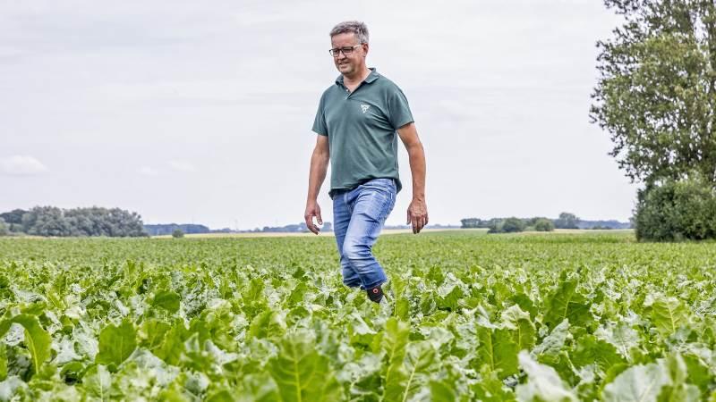 Maribo-sorterne Roxy og Davinci har meget stort bladdække, der hjælper mod sent fremspiret ukrudt, konstaterer salgschef Ole Lauridsen, MariboHilleshög