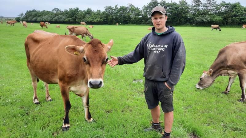 Mark Hausted er nyetableret landmand med sin jersey-bedrift, som han har forpagtet nær Ribe. I år debuterer han så også som kvægudstiller på Ribe Dyrskue. Foto: John Ankersen