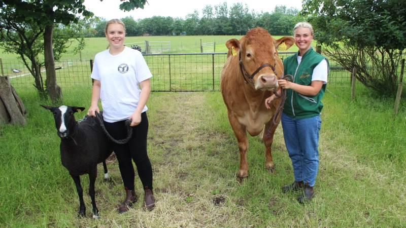 Martine Bon, (tv), og Amalie Thygesen, er både veninder, naboer og vilde med dyrskuer. De hepper på hinanden ved konkurrencerne indenfor henholdsvis får og kødkvæg. Foto: John Ankersen