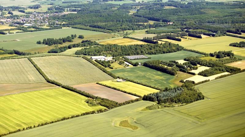 Landbrugsarealet fylder meget i Danmark med sine betragtelige 60 procent, hvilket er langt mere procentmæssigt end i nogle af vores andre nabolande. Men på halvtreds år har der alligevel været et betragteligt fald. Foto: AT Luftfoto.