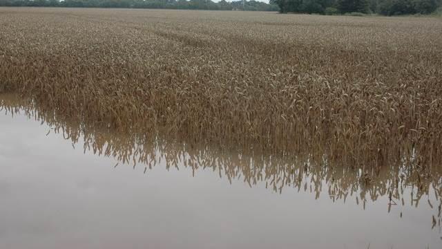 Delstaterne Nordrhein-Westfalen og Rheinland-Pfalz i Tyskland er blevet stærkt påvirkede af den enorme mængde nedbør - også i landbruget. Foto: Philip Hallingvia Wikimedia Commons