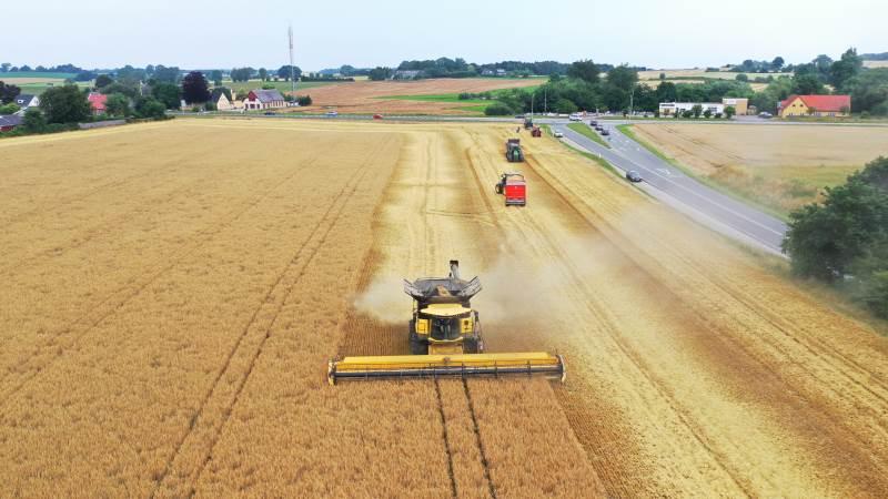 Onsdag i uge 28 høstede Erik og Helge Jensen, Haulund og Bakkegaard ved Frørup de første syv hektar med vinterbyg, og blev dermed blandt de første på Fyn til at høste korn. Fotos: Per Jørgensen.