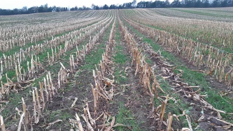 Seges har udviklet en applikation på landmand.dk, der viser hvilke marker, man har tilmeldt med frivillige målrettede efterafgrøder i 2021. Foto: Agri Nord