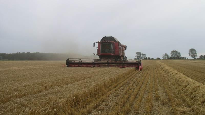 Rådet fra SvineRådgivningen er, at man får foretaget en hurtiganalyse af det første nyhøstede korn, så snart man begynder at fodre med det. Foto: Erik Kjærgaard Christensen