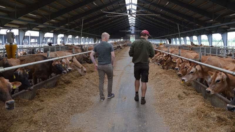 Snakken sporer sig hurtigt ind på emner som udsætningsprocent, produktionsegenskaber og legendariske tyrefædre, da Rik Kool og Niels Ulrik Andersen mødes på staldgangen på Andekærgård.