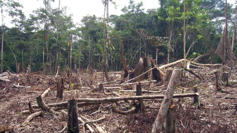 Med det nye satellitsystem, TFVI, har verden nu et nyt værktøj til at forhindre uoprettelige katastrofer i verdens regnskove, inden det er for sent. Foto: Matt Zimmerman, CC BY 2.0  via Wikimedia Commons