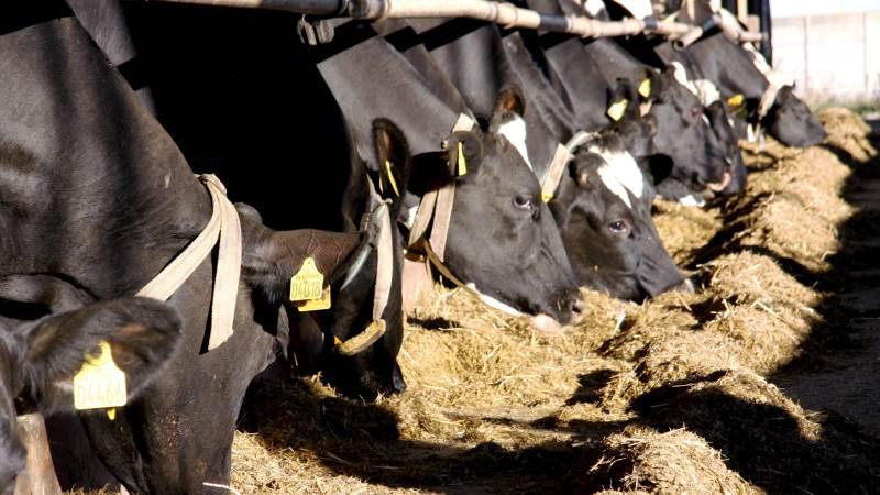 Alltech hjælper mælkeproducenter på tværs af Europa med at holde deres besætninger fri for varmestress. Arkivfoto: Tenna Bang