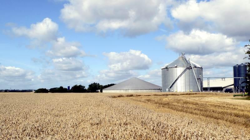 I en video på Svineproduktion.dk kan man høre Kim Kofoed forklare nærmere om, hvilke elementer i ens oplagring af korn, der er vigtige for at sikre en god ensartet kvalitet. Arkivfoto
