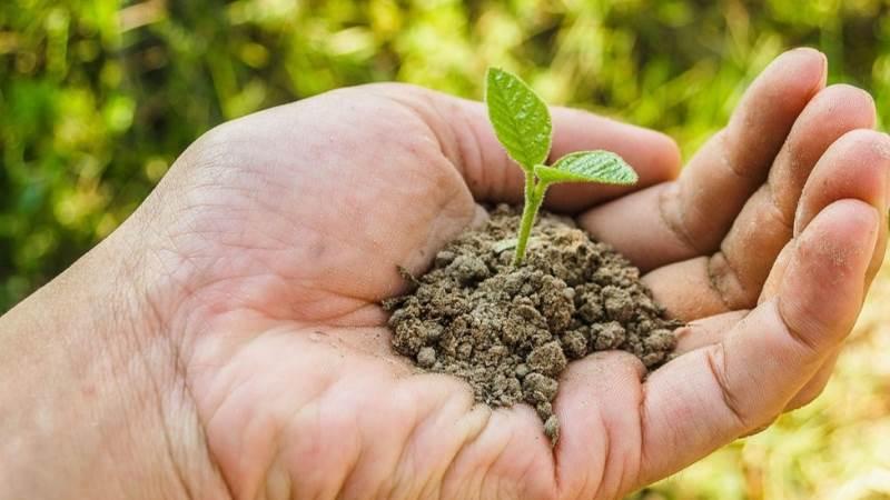 Teknologisk Institut undersøger, om økologisk dyrkningspraksis og øget biodiversitet kan bidrage til mere klimarobuste dyrkningssystemer.