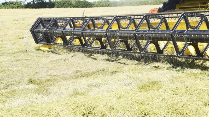 Frøfirmaet DLF oplyser i et nyhedsbrev, at 80 procent af frøet i Vendsyssel nu er høstet. Dette område er normalt sidst med høsten. Arkivfoto