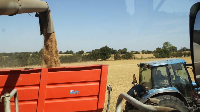 - Vi anbefaler, at du kun handler den mængde foder, du har korn til i forholdet 1.000 kg foder mod 700 kg korn, lyder det fra AgroMarkets. Arkivfoto