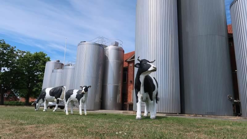 Bornholms Andelsmejeri eksporterer 97 procent af de 60.000 ton mælk, der årligt bliver indvejet. Foto: Karsten Himmelstrup